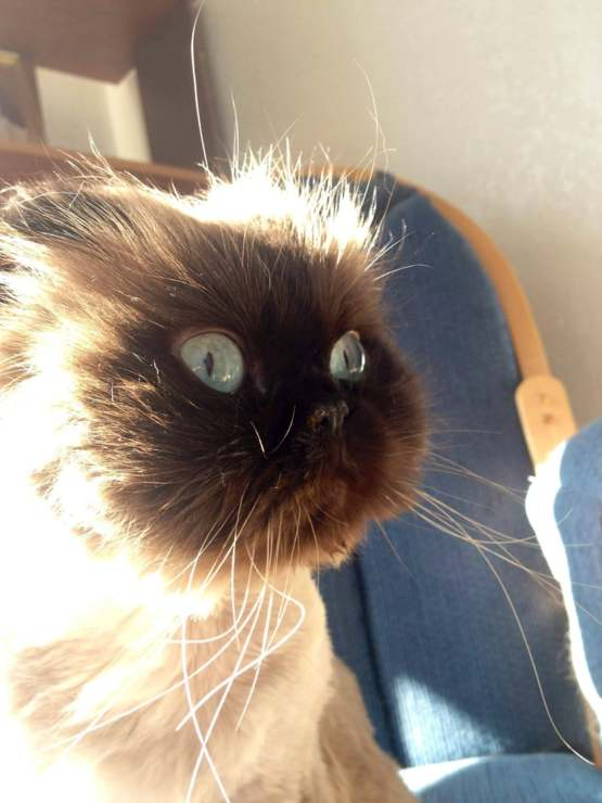 This cat looks like a cartoon bomb went off in its face