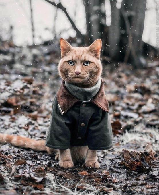 Cat wearing a coat
