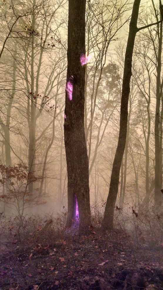 A Fire Burning Inside A Tree, taken by a fire-fighter during Western N.C. Wildfires.
