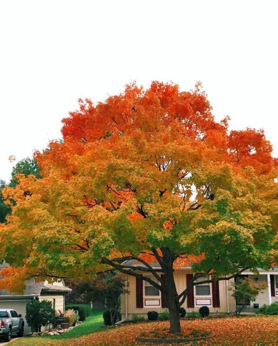 Fall is just beautiful