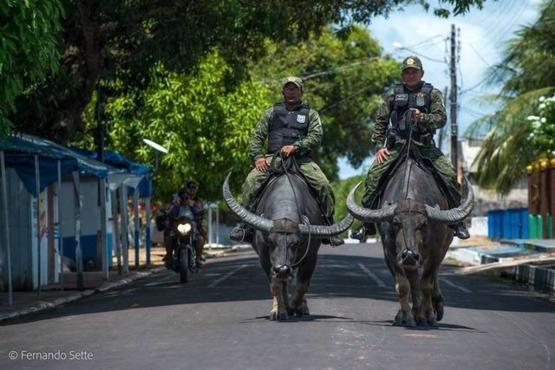 Brazilian police in the Amazon have taken to using water buffalo instead of horses because they can easily outrun criminals and manoeuvre through swamps