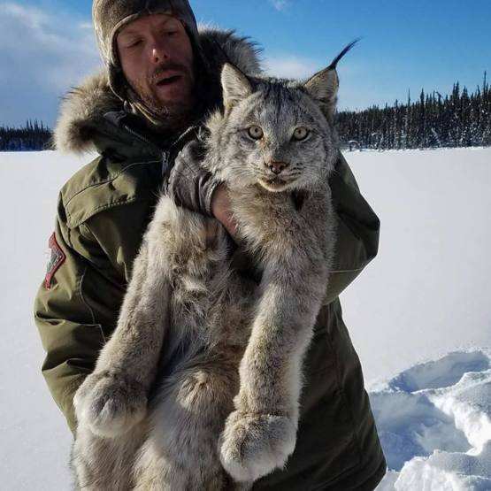 This photograph was taken by Sara Germain for the Lynx Project. It shows the moment Nathan Berg realizes that the large predator he's carrying is waking up from sedation