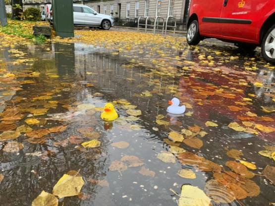 Someone in Edinburgh keeps putting out little rubber ducks in the puddles of Atholl Crescent every time it rains.