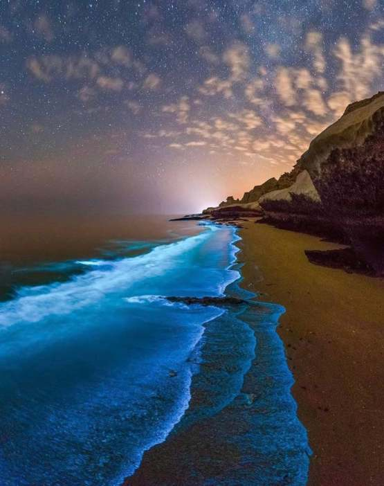 Bioluminescent planktons lighting the beaches is the Persian Gulf, Iran.