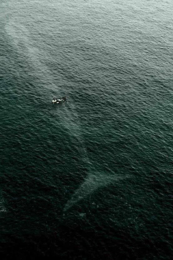 A Giant Whale from a bird's eye view.