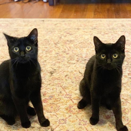 When I got these two kittens, the guy said I had to take both because they were so inseparable. Here they are a year later! ????