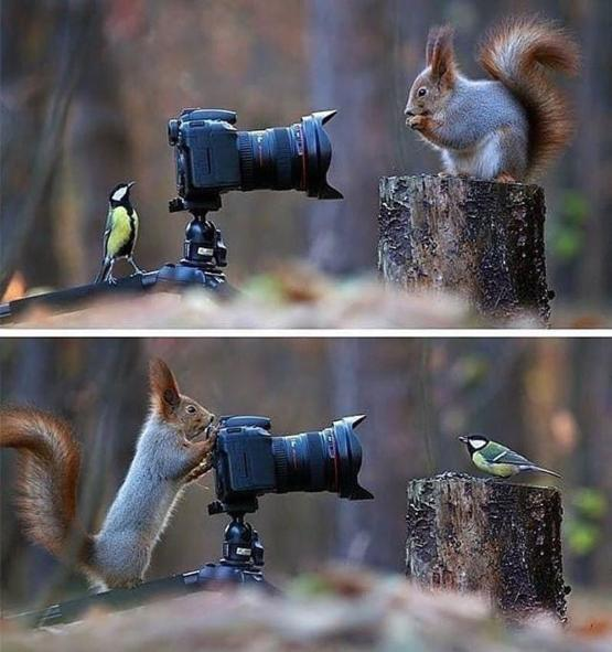 Lets take photos whilst the humans aren't watching