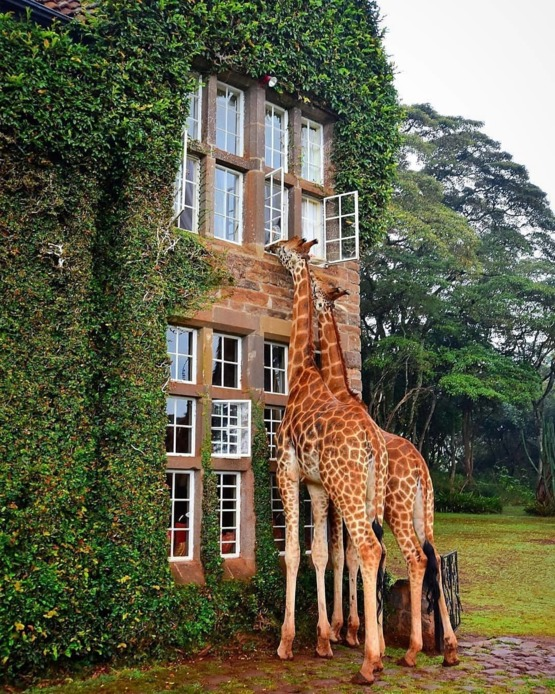 Girrafe Manor, Nairobi Kenya.