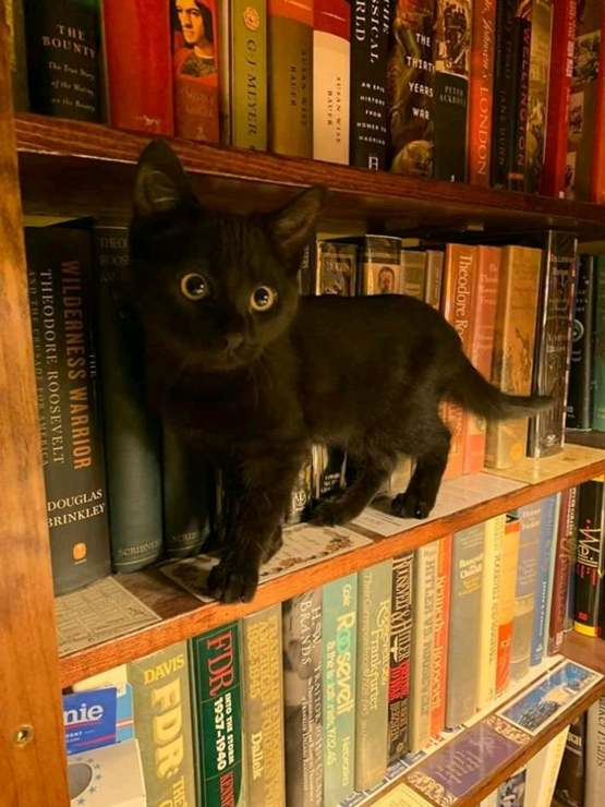 Books and cats ??