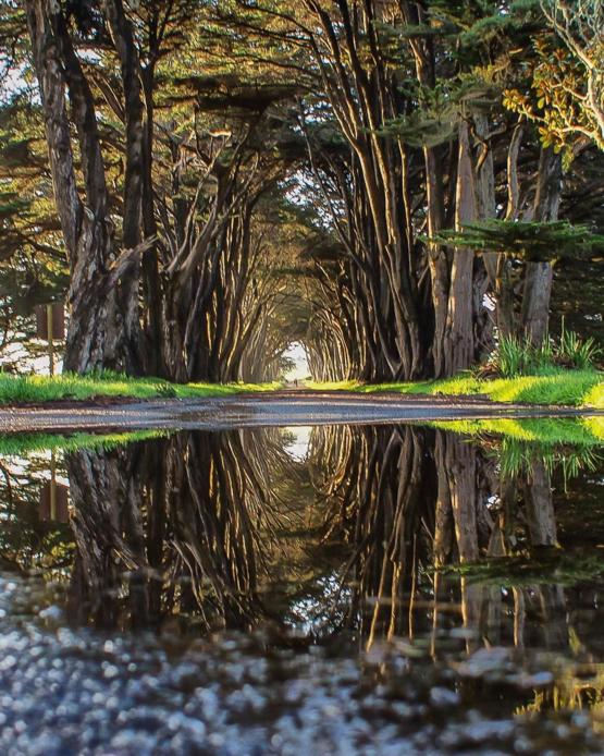 After a long rainy weekend I took this at Cypress Tree Tunnel in Marin County. :)