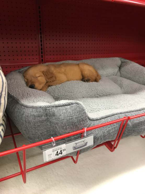 Pupper shopping break