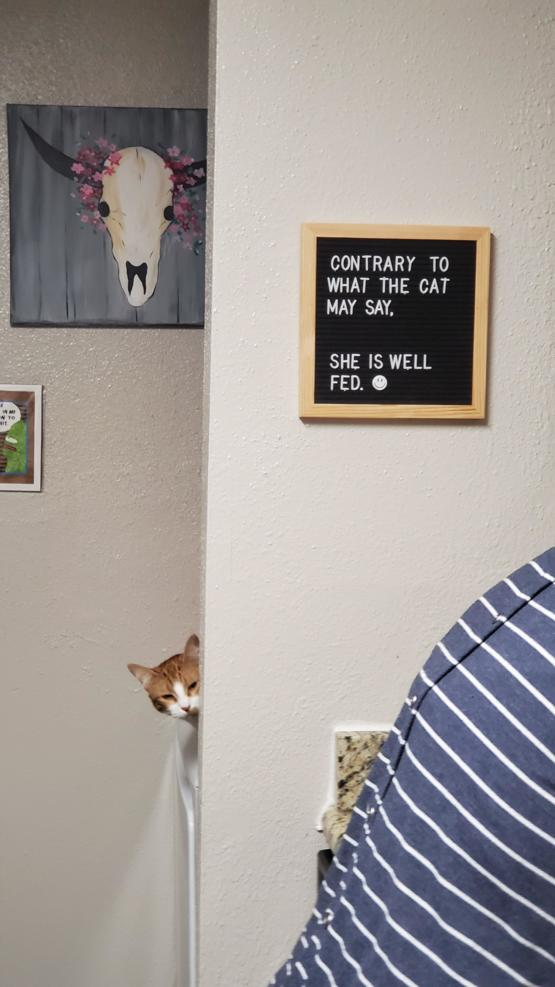 My Girlfriend's Cat wasn't too happy with the new sign I put up.