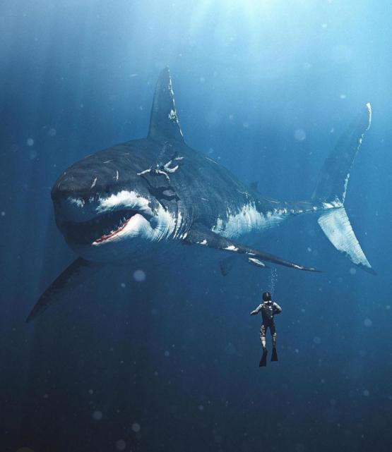 Art depiction of what size a megalodon shark would look like