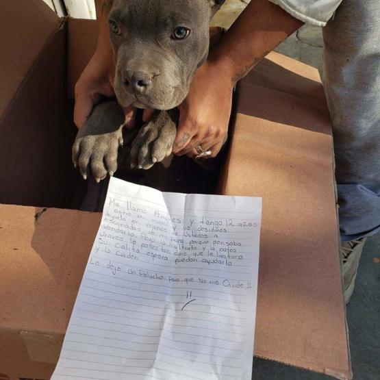 12 year old leaves his puppy at a shelter so that his dad stops beating it.