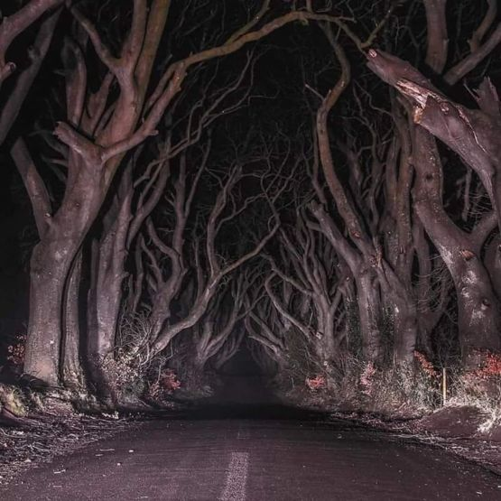The Dark Forest, Northern Ireland