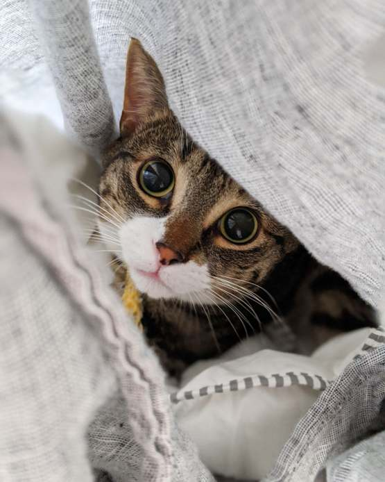 He discovered he can get inside the duvet cover.