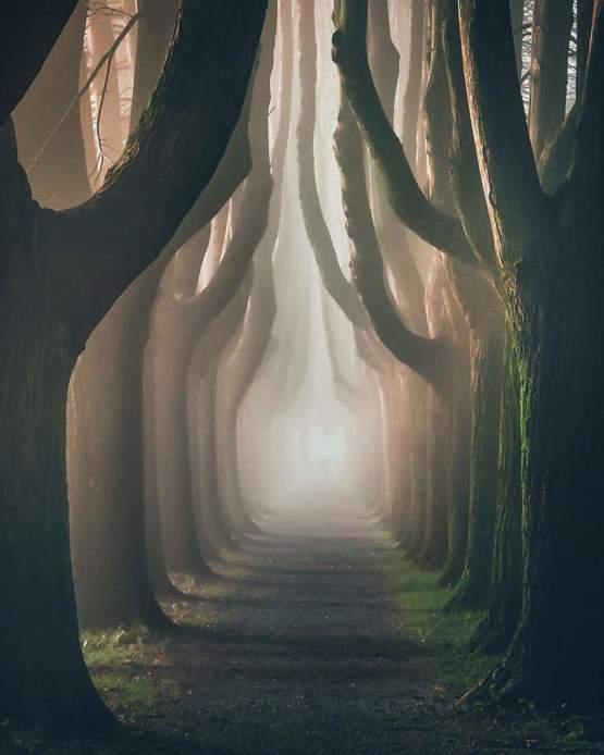 A foggy path in Lucca, Italy