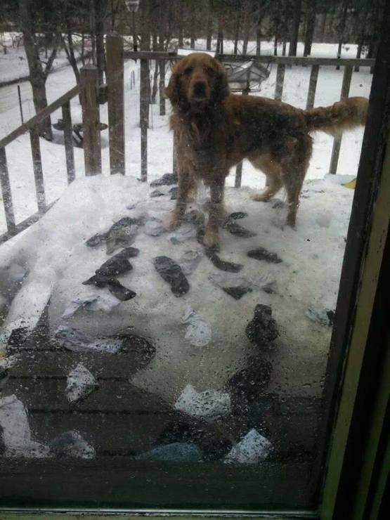 And with the melting snow, the Mystery of the Missing Socks was solved.