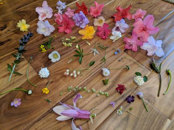 Found 48 kinds of flowers in my yard