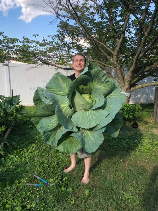 My cabbage