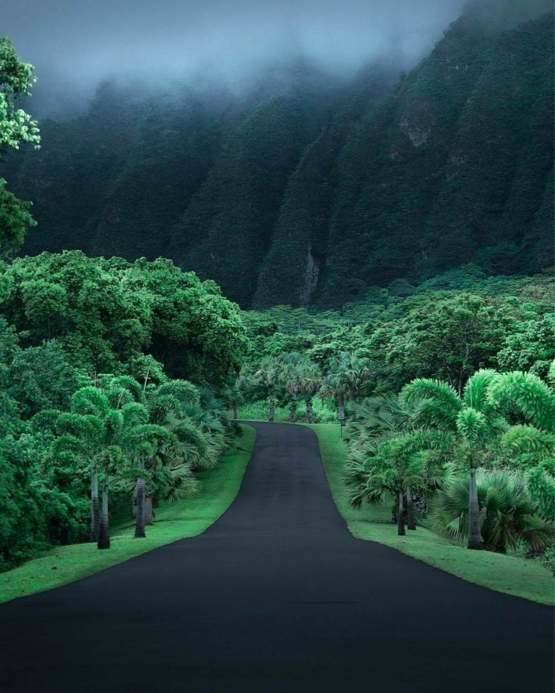 Just a road in Hawaii