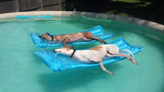 A couple of retired athletes relaxing in the pool.