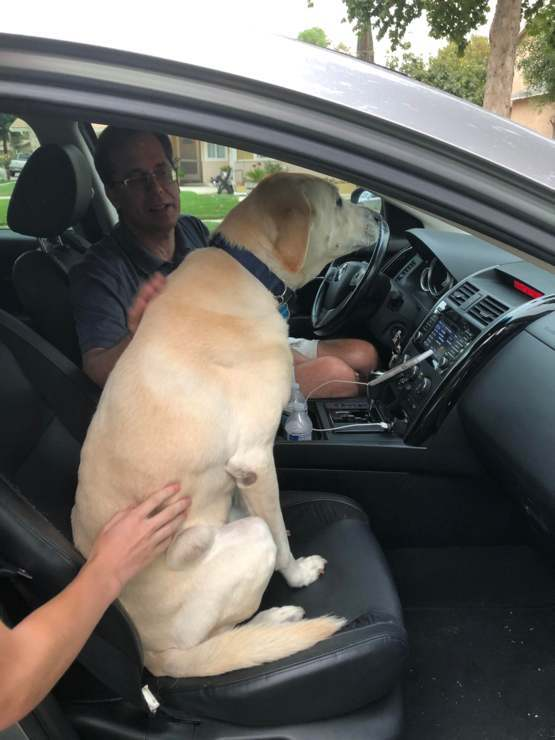 After months of not seeing my dad, my doggo refuses to leave his car.