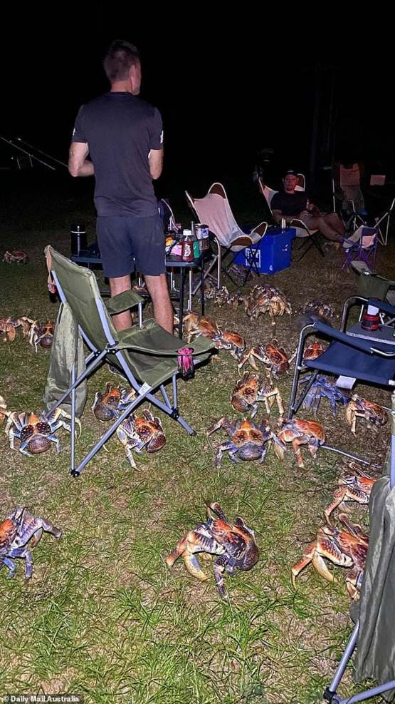 Coconut crabs invade BBQ on Christmas Island after they smell food