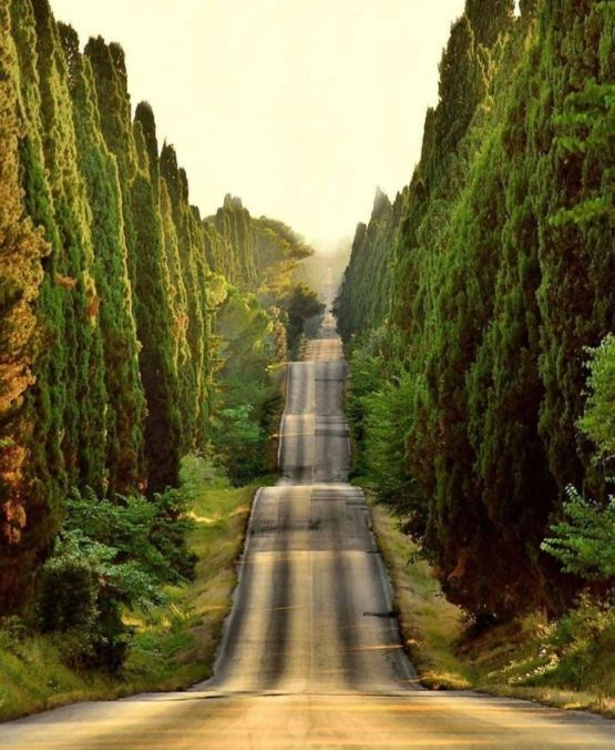 A lonely road in Tuscany ,Italy