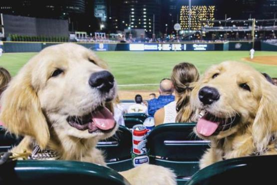 Imagine going to a baseball game and getting sat behind these two cuties