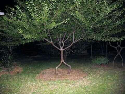 Awesome tree seen first time in life