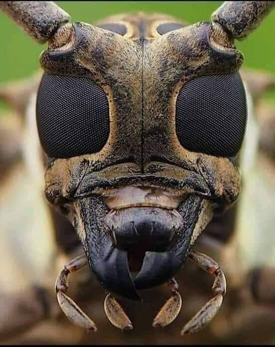 Photograph of the face of a bee taken with a high-resolution camera ???? ????