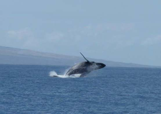 This photo my mum took off the coast of Maui