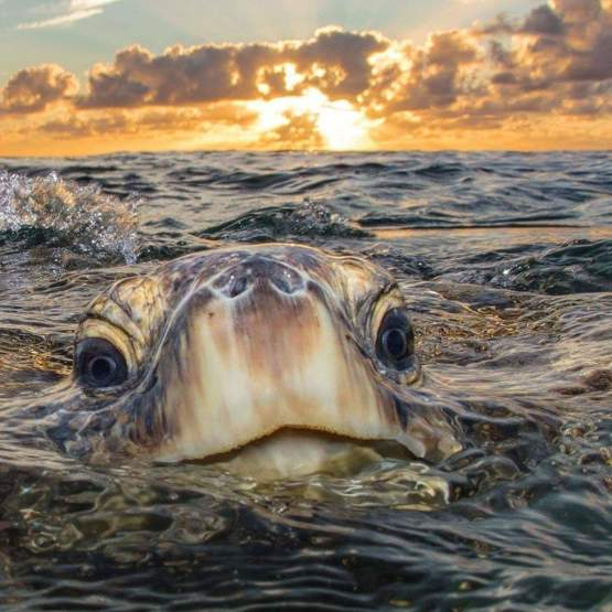 Cute turtle with Sunset ???????? ????thephilwaller