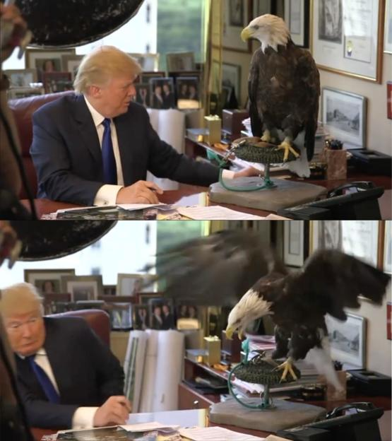 The Bald Eagle knew