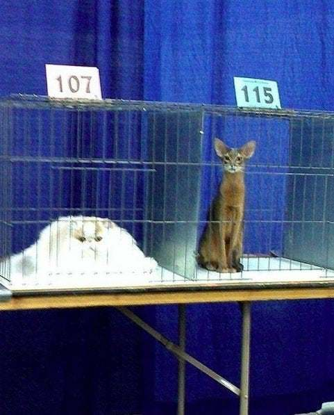 Different breeds of cats have different melting points.