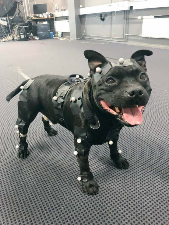 Uuno the game developing dog