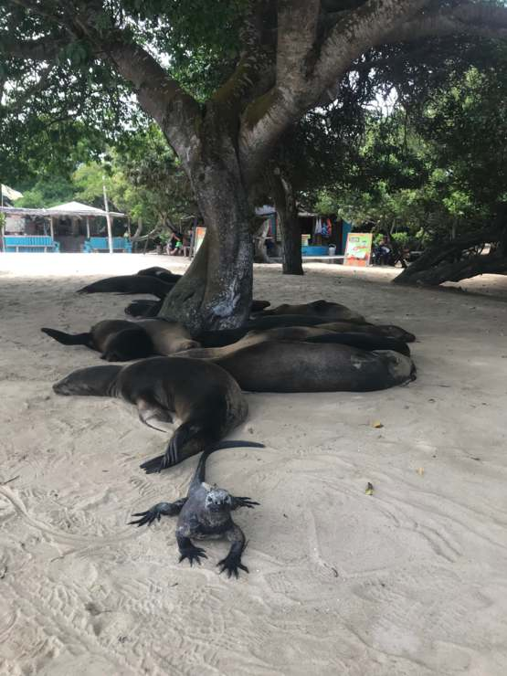A year ago, I went to Galapagos Islands and met this iguana and his gang of sea lions.