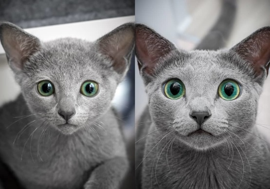 Two years apart cat