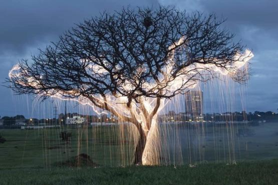 Fireflies photograph in trees with long time exposure.
