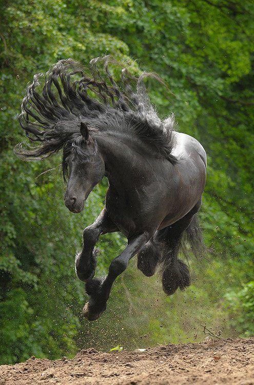 This Horse just living life!