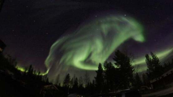 The northern lights in this picture looks like a giant wolf
