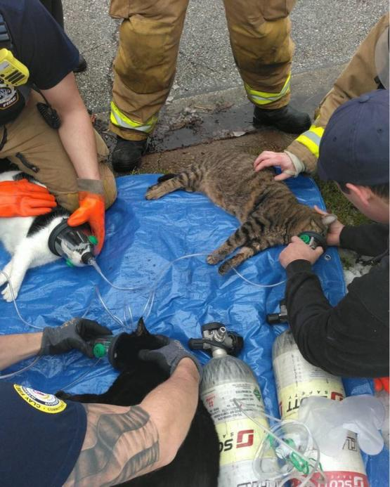 Firefighters save good kitters.