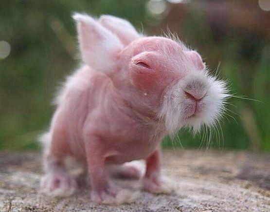 A newborn rabbit looks like a kung fu master