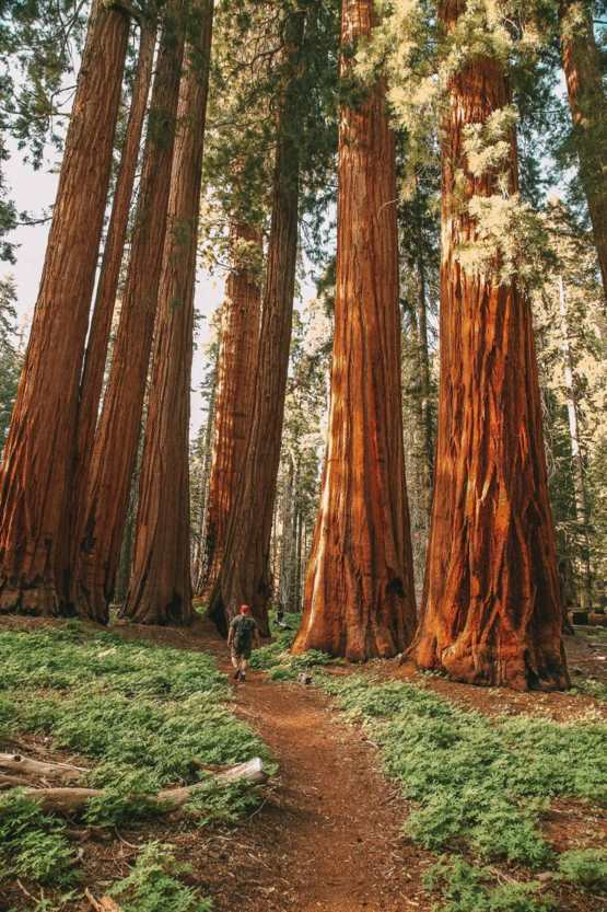 National Park is amazing in California.