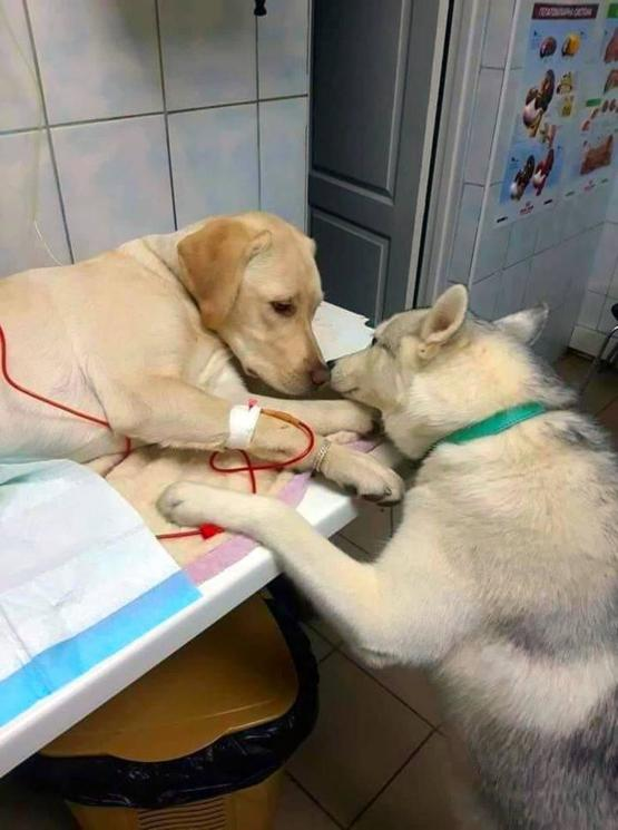 Vet has a comfort dog to let sick patients know everything will be alright