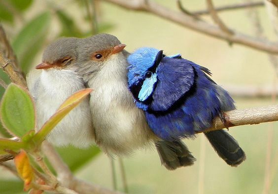 Who said birds won't lie on their side when they sleep Photo by Kamelfisk on Flickr