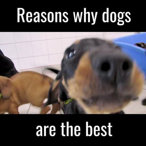 Why dogs are the best ever  ????  ???? #rescuedogs #dogs #puppies #adogisforlife #ad