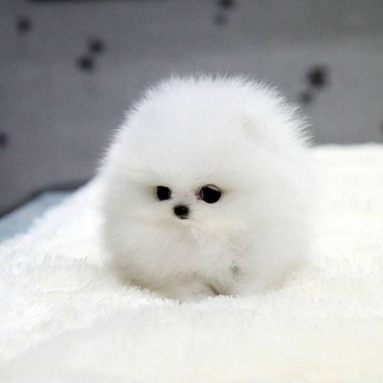 Tiny ball of floof..