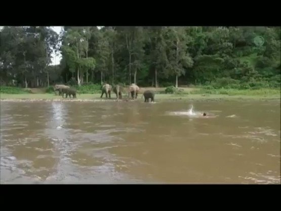 Elephant Rescues Man Who Appears to be Drowning